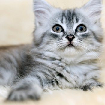 Are you repulsed by your cat's bad breath?